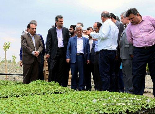 شرکت در افتتاحیه نخستین کشت نشایی پنبه کشور در روستای مامایی گرگان