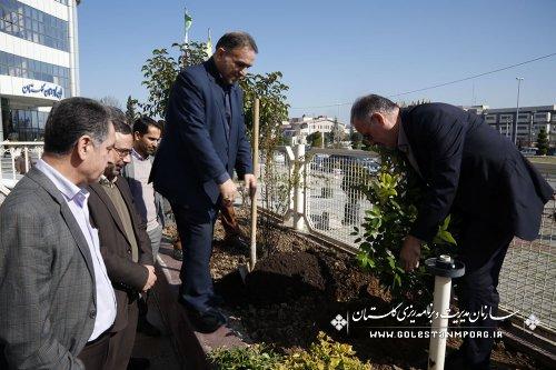 برگزاری روز درختکاری در سازمان مدیریت وبرنامه ریزی استان گلستان