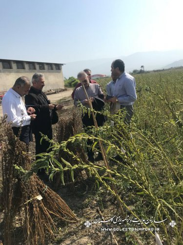 بازدید دکتر روزبهان ازمرکز تحقیقات کشاورزی واقع در ایستگاه تحقیقات عراقی محله گرگان
