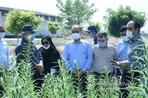بازدید رئیس سازمان از طرح های تحقیقاتی مرکز تحقیقات و آموزش کشاورزی استان