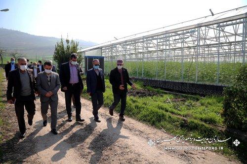 بازدید رئیس سازمان مدیریت و برنامه ریزی استان گلستان از مجتمع کشت و صنعت دکتر بسکی در مینودشت